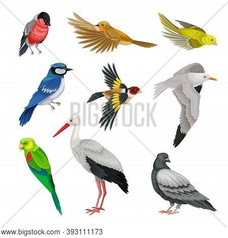 Birds As Warm-blooded Vertebrates Or Aves With Feathers And Toothless Beaked Jaws Vector Set