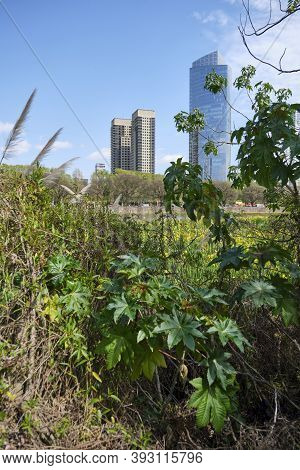 Buenos Aires / Argentina; Oct 6 2020: In The Foreground, Vegetation Of The Costanera Sur Ecological