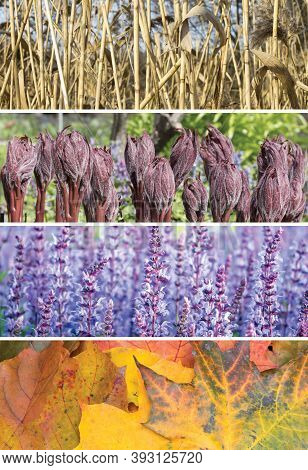 A Collage Of Scenes Of The Four Seasons: Spring, Summer, Fall, Winter