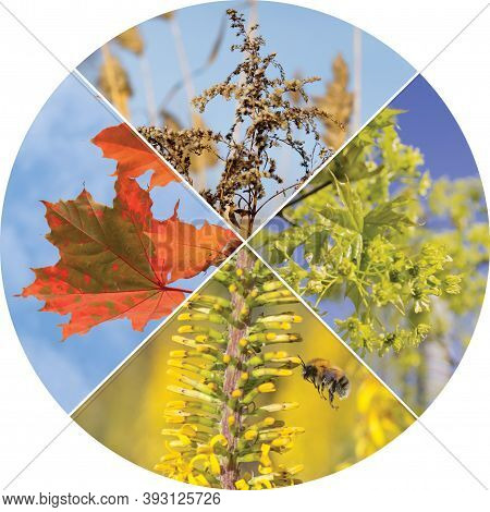 Collage In In The Form Of A Circle With Four Seasons Of The Year