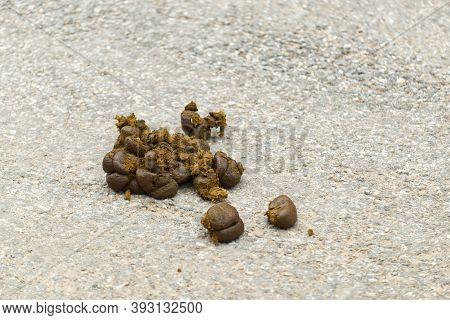 Fresh Horse Poop Or Dung On The Road In The Farm.