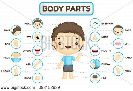 A Vector Set Of Boy Body Parts With Detailed Part Of The Body