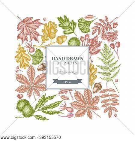 Square Design With Pastel Fern, Dog Rose, Rowan, Ginkgo, Maple, Oak, Horse Chestnut, Chestnut Hawtho
