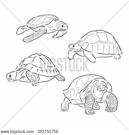 Turtle Line Art Coloring Book Illustration. Turtle Animal Vector Sketch Illustration