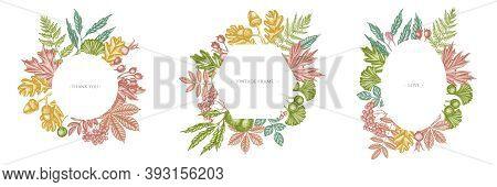 Frames With Pastel Fern, Dog Rose, Rowan, Ginkgo, Maple, Oak, Horse Chestnut Chestnut Hawthorn Stock