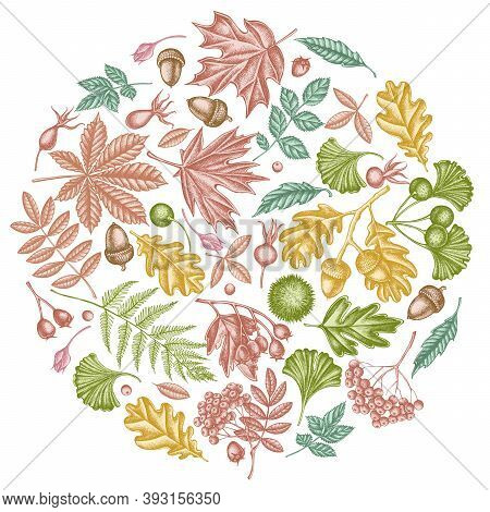 Round Design With Pastel Fern, Dog Rose, Rowan, Ginkgo, Maple, Oak, Horse Chestnut, Chestnut Hawthor