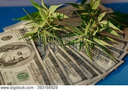 Marijuana Leaf And Us Dollar Banknote. Marijuana Business Concept. Marijuana Drug Sales. Cannabis Wi