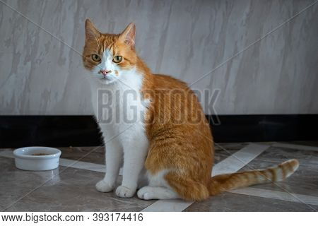 Red Domestic Cat At The Bowl Waiting For Food