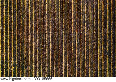 Lonely Green Tree Top Aerial View On The Plowed Field With Picturesque Evening Sunlight Spots With G