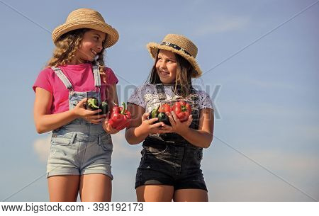 Selling Homegrown Food Concept. Organic Vegetables. Vegetables Market. Happy Sisters Work At Family