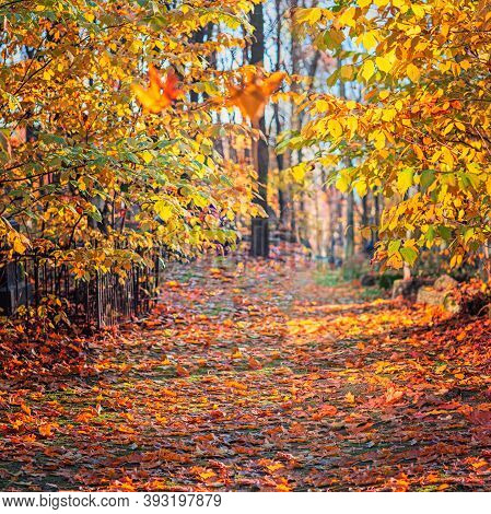 Autumn Background, Park Alley In The Season Of Leaf Fall, Panorama Of A Path With Autumn Leaves, Sun