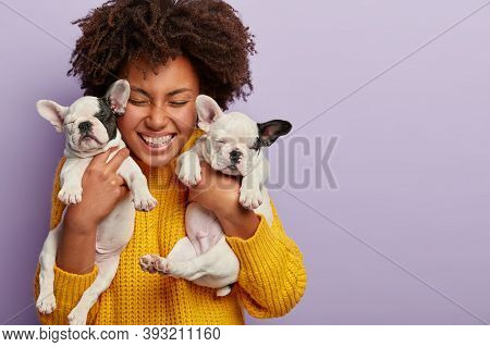 Close Up Shot Of Joyful Afro American Woman Carries Black And White Small Puppies Who Make Her Fun,