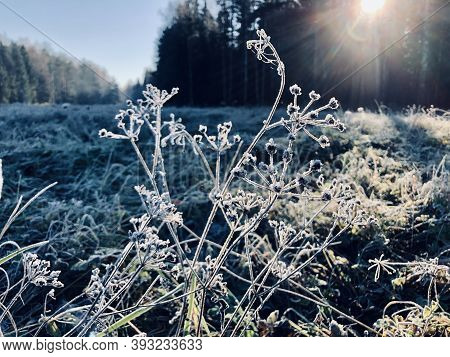 Abstract Natural Background From Frozen Plant Grass Covered With Hoarfrost Or Rime