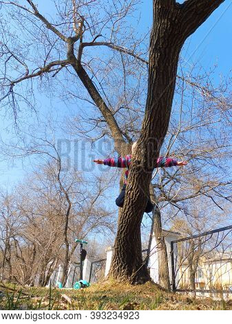 Child Of Four Or Five Years Old Climbed  Tree In  Park, People Concept - Overcoming  Fear Of Heights