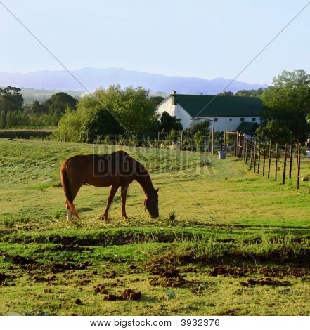 Horse And Farmhouse
