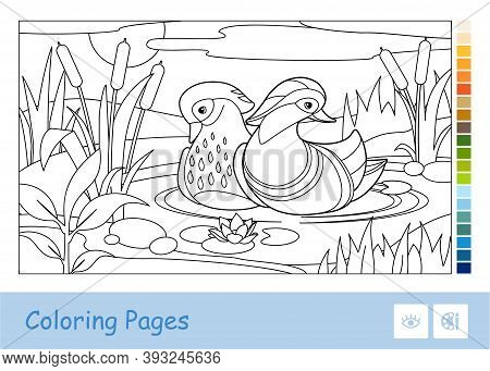 Colorless Vector Contour Image Of Mandarin Ducks Floating On A Forest River Near Reeds And Water Lil