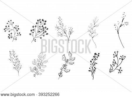 Doodle Collection Of 20 Hand-drawn Berries. Big Collection Of 20 Hand-drawn Leaves. Big Floral Botan