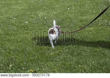 Pet Owner Taking The Dog For A Walk In The Park