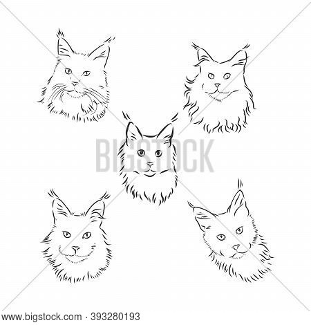 Cute Cats. Vector Illustration In Black And White, Portrait Of A Cat, Cat Head Vector Sketch Illustr