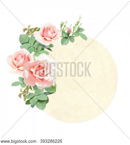 Retro card with branch of Climbing rose with pink flowers. Vintage round label with roses. Isolated on white background. Mock up template. Copy space for text