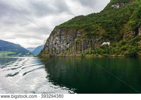seagulls over a beautiful fjord, Norway