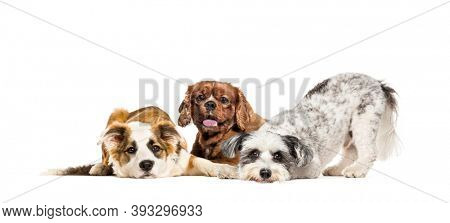 Group of apathetic and sick Crossbreed dogs sitting together in a row