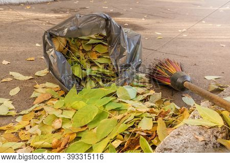 Autumn Yellow Leaves. Cleaning Of Street Areas. Fallen Leaves From Trees Are Swept And Collected In