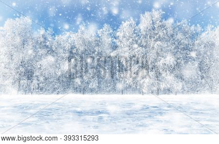 Snowfall In The Forest. White Birches Are Covered With Frost And Snow. Beauty In Nature. Winter Fros