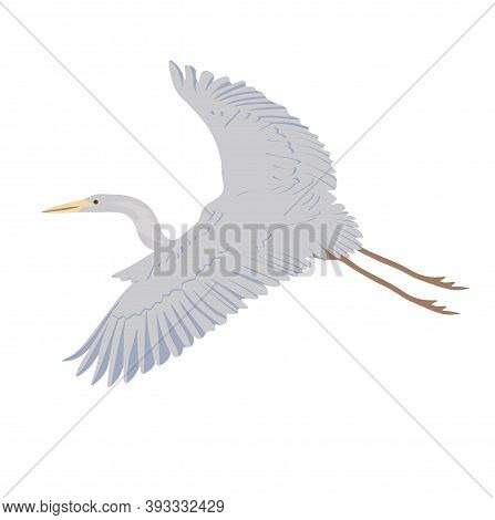 Grey Heron In Flight Vector Stock Illustration. Wide-spread Wings With Feathers. A Lanky Crane. Stor
