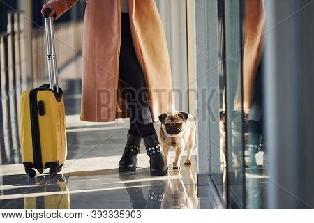 Young Female Passenger In Warm Clothes With Tickets, Her Dog And Baggage In Airport Hall.