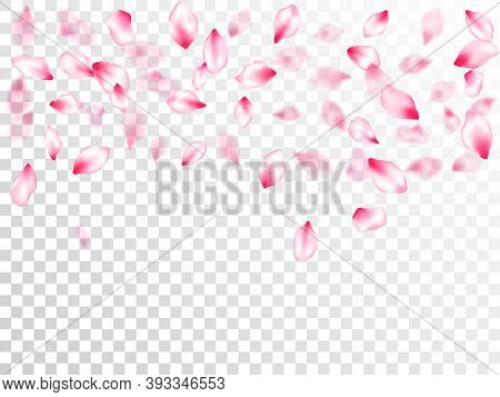 Spring Blossom Isolated Petals Flying On Transparent Background. Close Up Bloom Elements. Pastel Pin