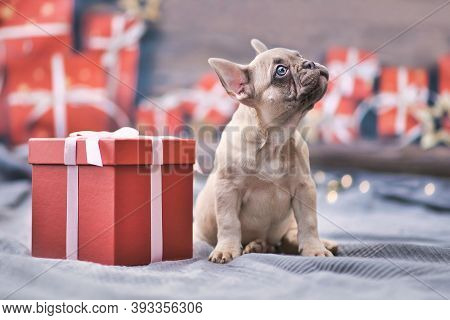 French Bulldog Dog Puppy Sitting Next To Red Christmas Gift Box With Ribbon Surrounded By Seasonal D
