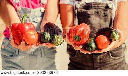 Farmers Hold Peppers Eggplants And Cucumbers. Farmer Presenting Organic Homegrown Vegetables. Homegr