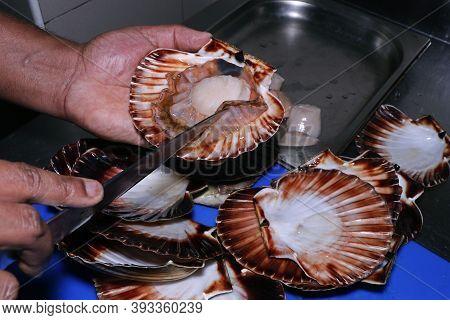 Live Scallop In A Shell, Chef Preparing In A Kitchen