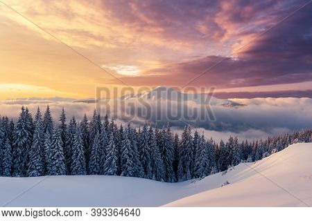 Fantastic winter landscape in snowy mountains glowing by morning sunlight. Dramatic wintry scene with snowy trees and hight mountain peaks peeping out of the fog at sunrise. Christmas background
