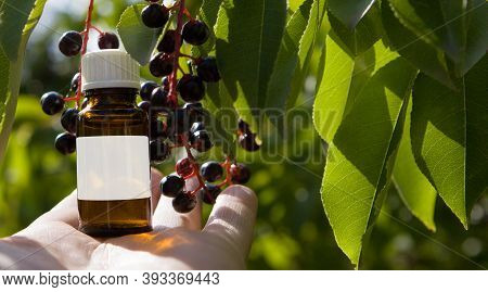 Black Cherry Extract, Bottle With The Label - Mockup. Bird Cherry Extract, Natural Vitamins. Alterna