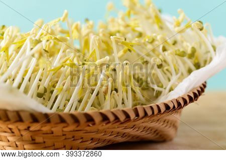 Mung Bean Sprouts Are Growing In A Bamboo Basket At Home, Organic Plant For Asian Food Cooking