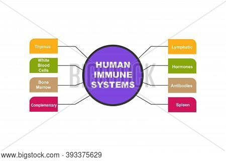 Diagram Of Human Immune Systems With Keywords. Eps 10 - Isolated On White Background