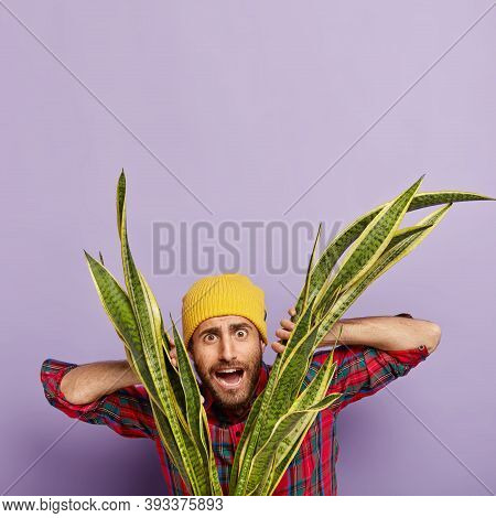 Vertical Image Of Surprised Puzzled Male Florist Looks Through Leaves Of Green Snake Plant, Takes Ca