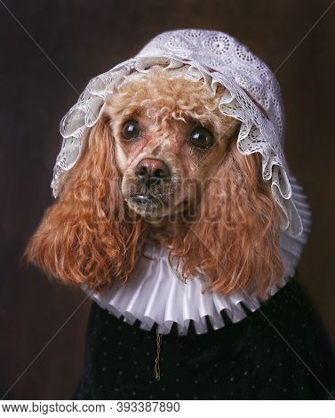 Portrait Of Miniature Poodle In White Collar And Bonnet.