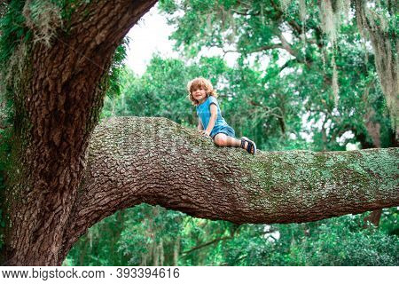 Cute Kid Boy Sitting On The Big Old Tree On Sunny Day. Child Climbing On Tree Hight, Outdoor Lifesty
