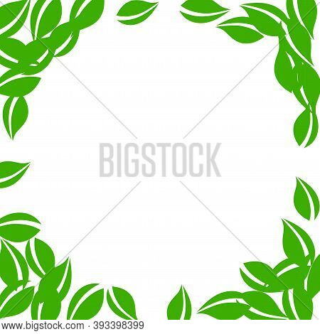 Falling Green Leaves. Fresh Tea Neat Leaves Flying. Spring Foliage Dancing On White Background. Allu