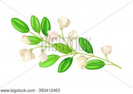 Bloomy Flower Branch With Tender Florets Vector Illustration