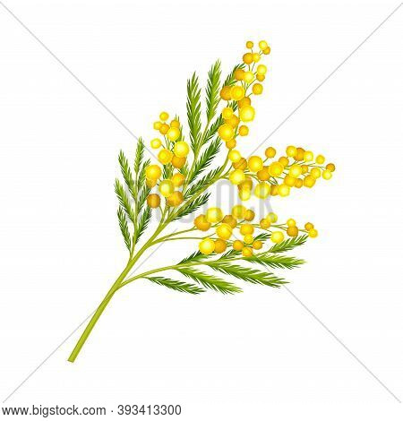 Flower Twig With Small Yellow Florets And Green Leaves Vector Illustration