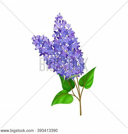 Flower Twig With Small Blue Florets And Green Leaves Vector Illustration