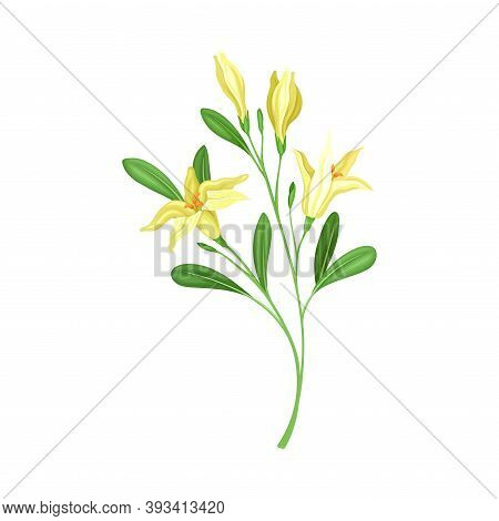 Florescent Of Flower Branch With Lush Petals And Green Leaves Vector Illustration