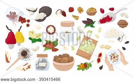 Nuts, Seeds Isolated On A White Collection Of Vector Illustrations. Healthy Food , Organic Almonds,