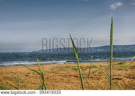 Green Grass On The Background Of The Seascape. Image Of Green Grass Stalks On A Background Of Golden