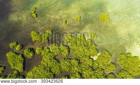Tropical Mangrove Green Tree Forest View From Above, Trees, River. Mangrove Landscape, Ecosystem And