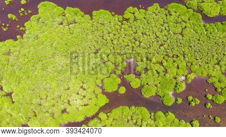 Tropical Mangrove Green Tree Forest View From Above, Trees, River. Mangrove Landscape. Great Santa C